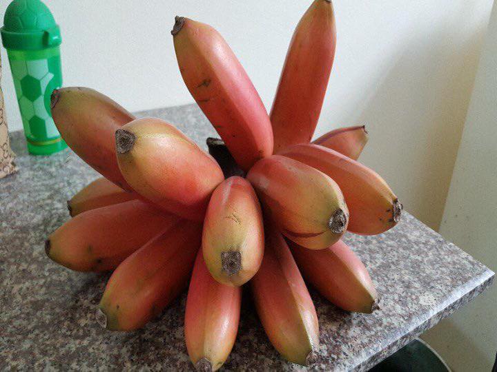 Giống chuối đỏ Dacca